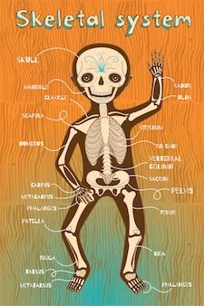 Ilustración de dibujos animados de vector del sistema esquelético humano para niños