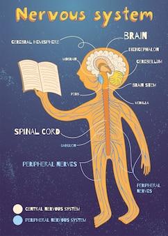 Ilustración de dibujos animados de vector del sistema nervioso humano para niños