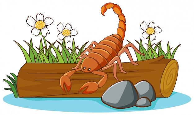 Ilustración escorpión sobre fondo blanco.
