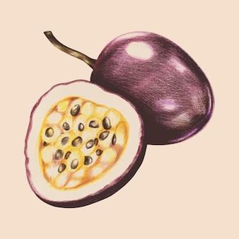 Ilustración del estilo acuarela de frutas tropicales