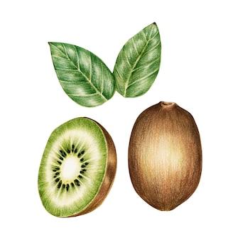 Ilustración del estilo de acuarela de frutas