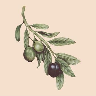 Ilustración del estilo de acuarela vegetal