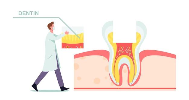 Ilustración de estructura y anatomía de dientes sanos