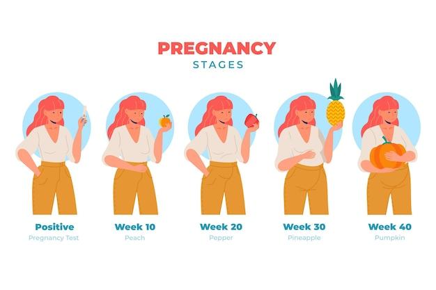 Ilustración de las etapas del embarazo