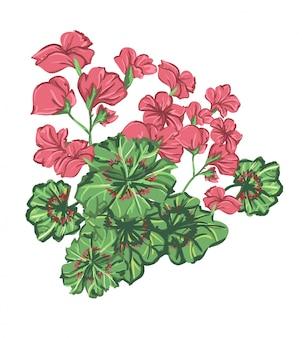 Ilustración flor de geranio. impresión de diseño floral