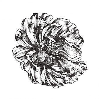 Ilustración floral vintage, grabado dibujado a mano imágenes prediseñadas.