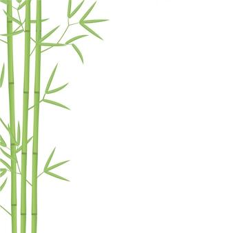 Ilustración de fondo de bambú. bambúes o planta de bambusa