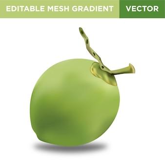 Ilustración de fruta de coco verde