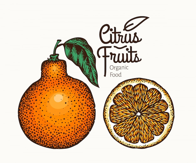 Ilustración de la fruta tangelo