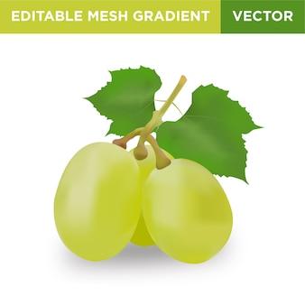 Ilustración de fruta de uva