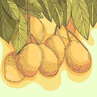 Ilustración de frutas de árbol de mango botánico
