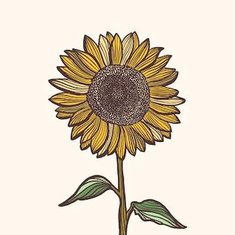 Ilustración de girasol con estilo dibujado a mano