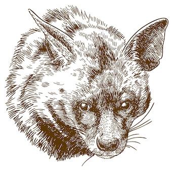 Ilustración de grabado de cabeza de hiena