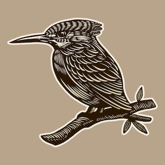 Ilustración grabado dibujo a mano vintage pájaro carpintero