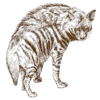 Ilustración de grabado de hiena