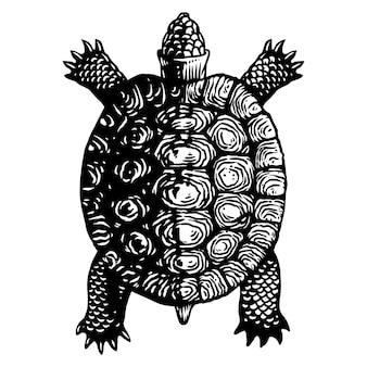 Ilustración de grabado de tortuga tortuga