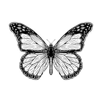 Ilustración de grabado de vector de mariposa dibujada a mano