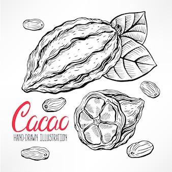 Ilustración de granos de cacao de bosquejo