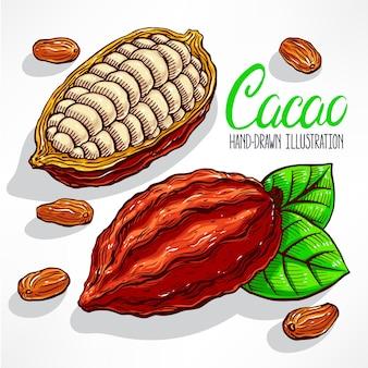 Ilustración de granos de cacao, frutas y hojas