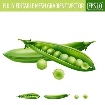 Ilustración de guisantes verdes en blanco