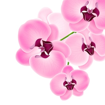 Ilustración hermosa flor de orquídea