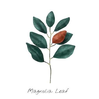 Ilustración de la hoja de magnolia aislada sobre fondo blanco.