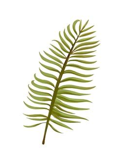 Ilustración de hoja de palma de aroca tropical