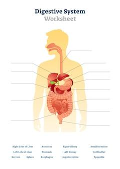 Ilustración de la hoja de trabajo del sistema digestivo
