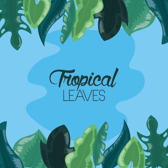 Ilustración de hojas tropicales