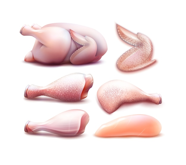Ilustración icono de carne de gallina con diferentes partes de pollo