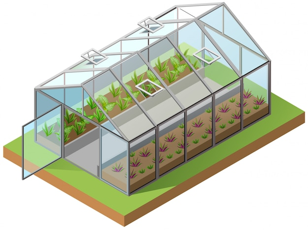 Ilustración isométrica 3d de invernadero. cultivo de plántulas en invernadero