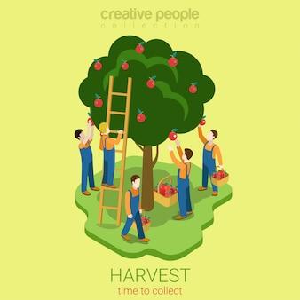 Ilustración isométrica del concepto de temporada de recolección de manzanas los hombres arrancan manzanas de la rama del árbol a la canasta