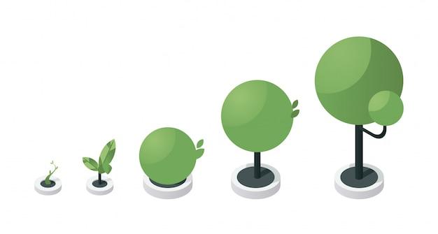 Ilustración isométrica de las etapas de crecimiento del árbol. pasos del proceso de desarrollo del árbol verde