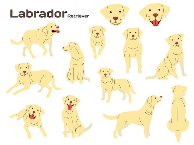Ilustración de labrador