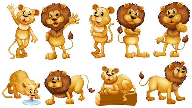 Ilustración de leones en diferentes acciones