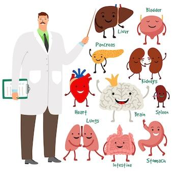 Ilustración linda del doctor y de los órganos internos humanos