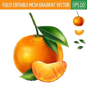 Ilustración de mandarina en blanco