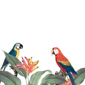 Ilustración de maqueta de follaje tropical de guacamayo