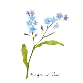 La ilustración de me olvida no flor aislada en el fondo blanco.