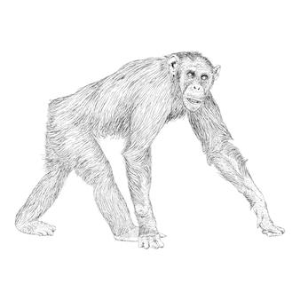 Ilustración de mono en estilo dibujado a mano