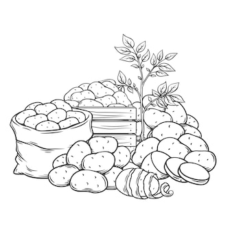 Ilustración monocromática dibujada a mano de contorno de tubérculos de patata