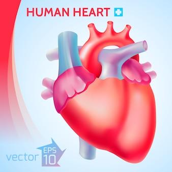 Ilustración de órgano sano
