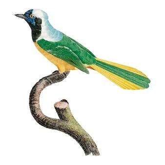 Ilustración del pájaro de la vendimia