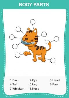 Ilustración de la parte del cuerpo del vocabulario del gato, escriba los números correctos de las partes del cuerpo