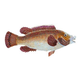 Ilustración de peces vintage