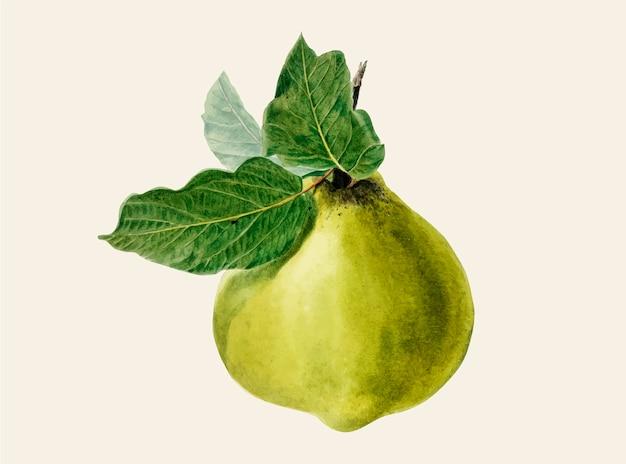 Ilustración de pera vintage