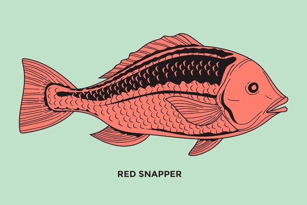 Ilustración de pez pargo rojo con trazo optimizado
