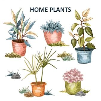 Ilustración de la planta en casa