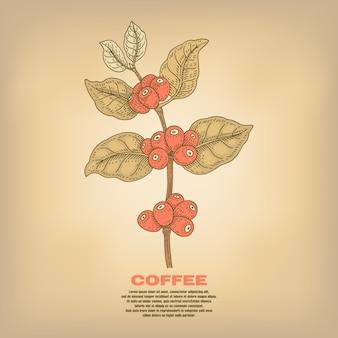 Ilustración de plantas de café.