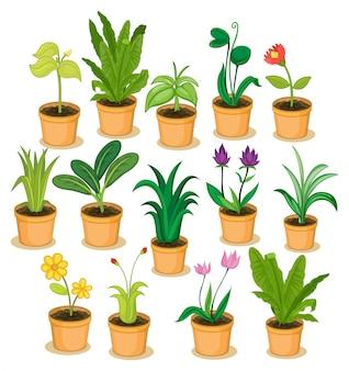 Ilustración de plantas en macetas y flores